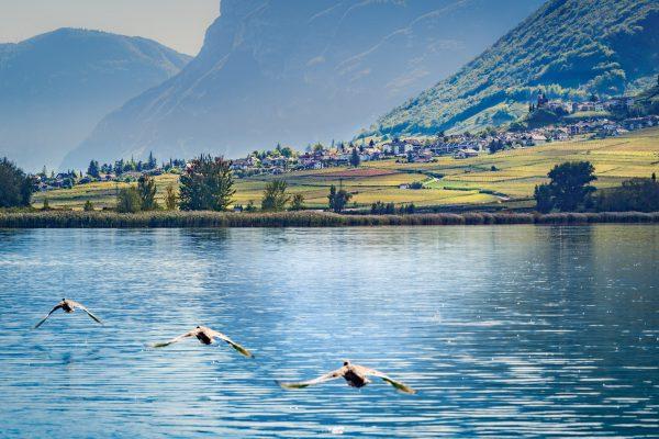 Blick über den Kalterer See nach Tramin